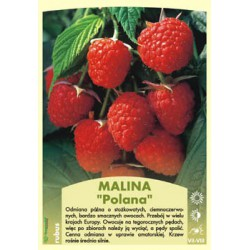 Rubus idaeus 'Polana' FP047