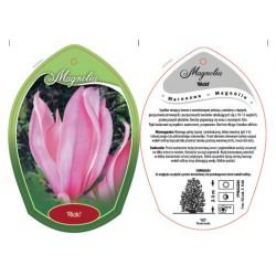 Magnolia 'Ricki' FPMAG009